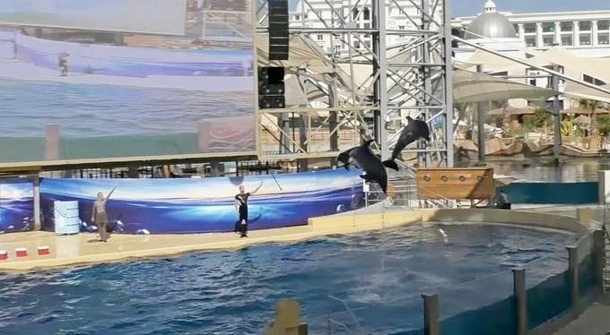 Land Of Legends шоу дельфинов